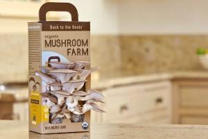 Сам собі господар: як вирощують гриби в домашніх умовах? – Inspired